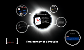 Copy of The Journey of a Protein