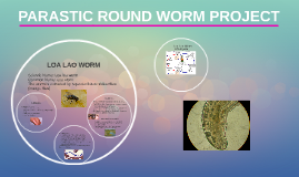PARASTIC ROUND WORM PROJECT