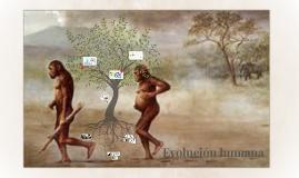 Evolución humana