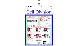 Biology - Cell Division/Mitosis