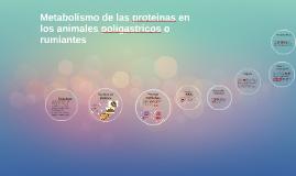 Copy of Metabolismo de las proteinas en los animales poligastricos o
