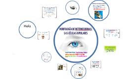 Morfología de Interneuronas: Las Células Bipolares.