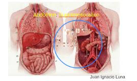 Abdomen: Supramesocolico