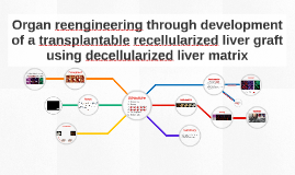 Organ reengineering through development of a transplantable