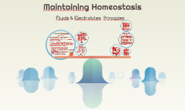 Copy of Maintaining Homeostasis