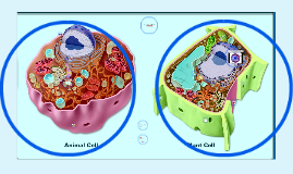 Plant and Animal Cell Tour