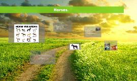Copy of Horses.