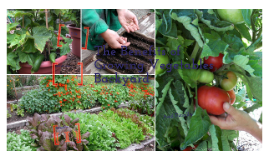 The Benefits of Growing Vegetables Backyard