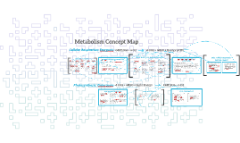 Metabolism Concept Map