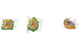 Cellular Anatomy
