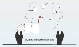 Sistema endocrino humano