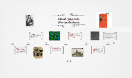 Life of HeLa Cells