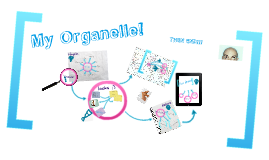 My Organelle