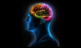 Fisioanatomia y patologia del cerebro