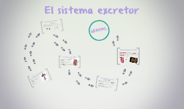 El sisteme excretor