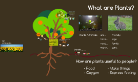 Lesson 2: Plants: Beautiful and Useful