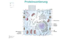 Proteinsortierung