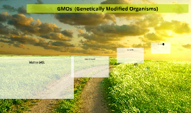 GMOs  ( Genetically Modified Organisms