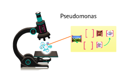 Copy of Pseudomonas putida as agent for Toxicity Level Degradation of Chlorinated Pesticides