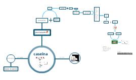 Copy of taller caseina