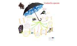 Umbrella species =)