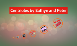 Centrioles by Eathyn and Peter