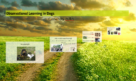 Observational Learning in Dogs