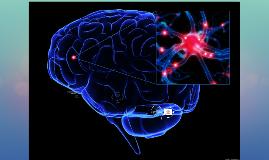 Дээд мэдрэлийн систем