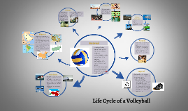 Copy of Life Cycle of a VolleyBall