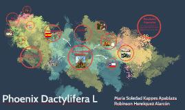 Phoenix Dactylifera L