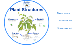 Copy of Plant Structures