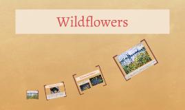 kindergarten wildflowers