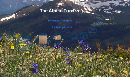 Copy of Alpine Tundra