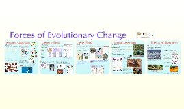 Evolutionary Forces
