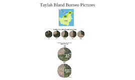 Taylah Bland - Borneo Rainforest Pictures