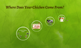 Where Does Your Chicken Come From?