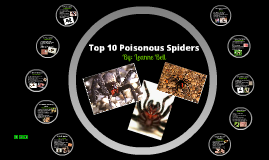 Top 10 Poisonous Spiders
