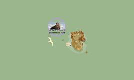 walrus project