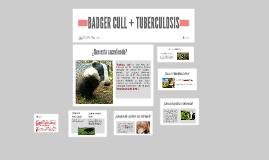 BADGER CULL + TUBERCULOSIS