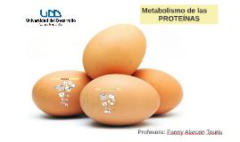 Metabolismo de las