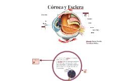 Córnea y Esclerótica