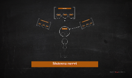 Sistema nervi