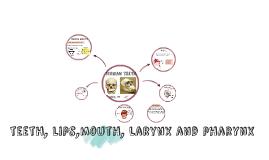 teeth, lips,mouth, larynx and pharynx