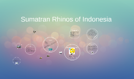 Raychel D. Sumatran Rhinos of Indonesia
