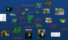 Copy of Drėgnieji atogrąžų miškai