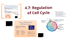4.7: Regulation of Cell Cycle