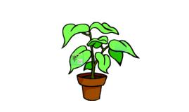 Investigating the Leaf Stomata