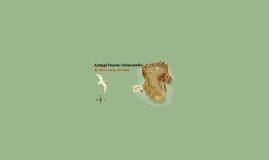 Amerigo Vespucci: Conquistador