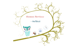 Copy of Sistema Nervioso Anfibios