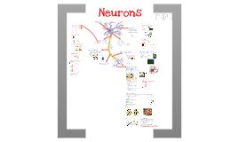 Copy of AP Bio- Physiology 7: Neurons